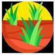 Planta hortícola y semillas
